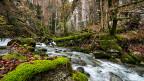 In rund 1800 Wasserproben aus fünf Bächen ist eine Vielzahl an Herbiziden, Fungiziden und Insektiziden nachgewiesen worden. In keinem Fall sind die gesetzlichen Anforderungen an die Wasserqualität eingehalten worden. Das zeigt die neue Studie.