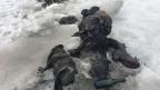 Verwitterte Kleider, Bergschuhe und andere Gegenstände, die auf dem Tsanfleuron-Gletscher im Gebiet des Glacier 3000 oberhalb von Les Diablerets am 13. Juli 2017 zusammen mit zwei Leichen gefunden worden sind.
