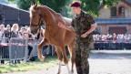 Interessierte Käufer ersteigern Pferde des mutmasslichen Tierquälers Ulrich K. aus Hefenhofen.
