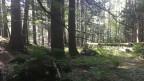Der Buchenwald am Bettlachstock hat in der Schweizerischen Waldlandschaft eine spezielle Bedeutung.