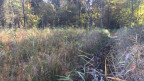 Das Moor ist bereits wieder spürbar feuchter. Die vielen Fehler aus der Vergangenheit hat man korrigieren können.
