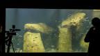 Lausannes neues Aquarium