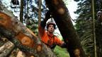 In der Schweiz gibt 250'000 Waldbesitzer, was eine effiziente Bewirtschaftung erschwert.