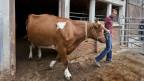 Gemüseproduzenten, Tierschützer, Vertreter der Fair-Food-Initiative und auch die Bevölkerung unterstützen die Bauern.