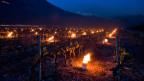 April 2017: Als Massnahme gegen den Frost brennen zwischen den Reben Frostkerzen.