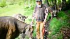 Der Bergbauer Armin Capaul hat 150'000 Unterschriften für die Hornkuhinitiative gesammelt, dabei wollte er das eigentlich gar nicht.