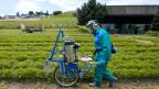 Bauern, die mit Pestiziden hantieren, sind stärker von Parkinson, Prostata-, Haut-, Hoden- und weiteren Krebsarten betroffen.