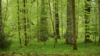 Symbolbild eines Waldes in der Schweiz.