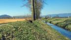 Landwirtschaftszone im Grossen Moos bei Galmiz.