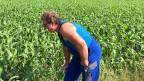 Bauer Stefan Zumsteg pflanzt auf einer Hektare Exotisches an - das afrikanische Sudangras oder auch Sorghum genannt.