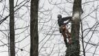 Auf dem Bild ist ein Mann zu sehen, der einen Baum fällt.