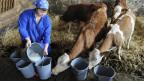 Die Bäuerin Christine Templer füttert Kälber mit Frischmilch.