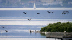 Das Bild zeigt Kormorane auf dem Neuenburgersee.