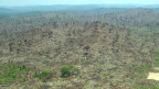 Brasilianische Industrie wehrt sich gegen illegales Abholzen.