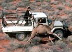 Ein Kamel rennt durch die Wüste, daneben ein Truck, ein Mann steht auf der Ladefläche.