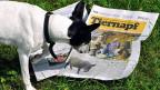 Der Willisauer Bote: Wie man in schwierigen Zeiten erfolgreich eine Lokalzeitung macht - eine Lektion aus dem Luzerner Hinterland.