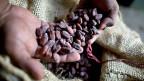 Immer mehr Kleinbauern holzen ihre Kakao-Bäume ab, weil sich die Produktion für sie nicht lohnt.