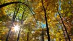 Waldbesitzer fordern dass ihre Zusatzleistungen künftig entschädigt werden.