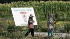 Auf rund 80 Prozent der biologisch bewirtschafteten Fläche weltweit werde die konventionelle Landwirtschaft kopiert. Anstelle von synthetischen Düngern würden natürliche verwendet; aber auch Bio-Monokulturen laugten den Boden, sagt Miguel Altieri. Bild: Bio-Betrieb in Thailand.