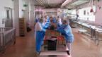 Zwei- bis dreihunderttausend Chinoise-Schalen werden zwischen Oktober und Ende Dezember bei Meinen geschnitten, 100 bis 150 Tonnen Fleisch pro Weihnachtssaison. Rund 40 der 250 Angestellten bei Meinen sind drei Monate lang mit fast nichts anderem beschäftigt.