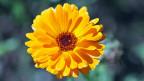 Im Weleda-Geschäftssitz in Arlesheim fallen die Wände in Gelb, Blau und Rot auf; die Farbenlehre Rudolf Steiners hat ihre Spuren hinterlassen. Im Sommer tragen Ringelblumen im Weleda-Garten zur Farbenpracht bei.