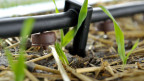 Taugt der biologische Pflanzenschutz als Alternative zu Pestiziden?