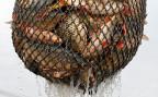 Anders als die Versauerung der Ozeane, die Verschmutzung mit Plastik oder der Klimawandel würde sich das Problem der Überfischung relativ schnell und kostengünstig lösen lassen, sagt der Experte.