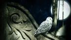 Die Eule-Vogel der Nacht.