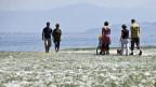 Menschen flanieren am Ufer des Bodensees in Arbon entlang.