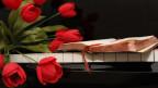 Rote Tulpen auf einem schwarzen Klavier.