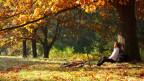 Radfahrer macht Pause unter herbstlich gefärbtem Baum im Sonnenschein