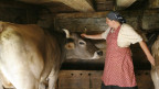 Bäuerin streichelt ein Rind im Stall.