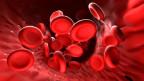 Blutkörperchen – stark vergrössert – fliessen durch die Blutbahn.