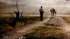 Ein Bauer mit seinem Pferd auf einem Acker.