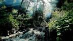 Quelle im Wald.