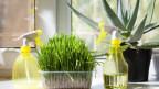 Pflanzen in der Wohnung.
