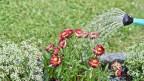 Jemand giesst mit einer Giesskanne Blumen.