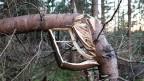 Ein umgeknickter Baum in einem Wald.