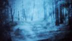 Waldlichtung in mystisch-blauer Atmosphäre.