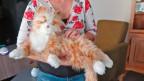 Roboterkatze auf Arm von Seniorin.