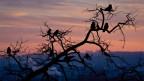Vögel sitzen auf einem Baum.