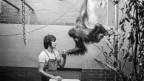 Eine Orang-Utan-Dame hängt im Käfig und hält einen Werter an der Hand fest.