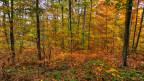 Ein Wald im Herbst mit vielen farbigen Blättern.