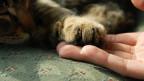 Eine Hand streichelt eine Katzenpfote.