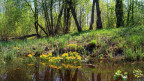Landschaft mit Sumpfgebiet.