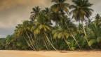 Ein Strand mit Palmen.
