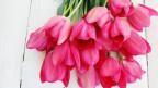 Ein Strauss mit pinken Tulpen.