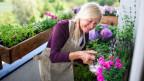 Seniorin pflegt Blumen auf ihrem Balkon,.