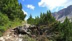 Ein Weg mit einem Wurzelstock in den Bergen.