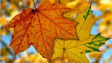 Audio «Die schönsten Herbst-Jodellieder» abspielen